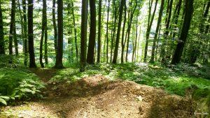 Stefanik-Trail-06-2016-01
