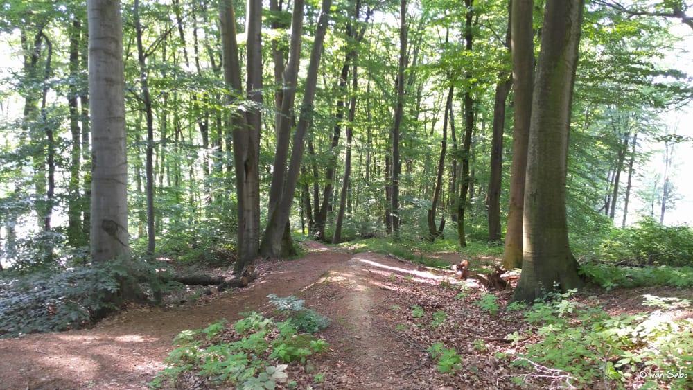 Stefanik-Trail-06-2016-02