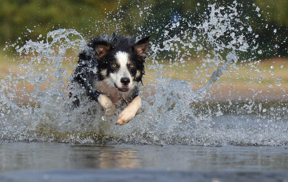 Čo robiť, keď ťa pri behaní začne naháňať pes